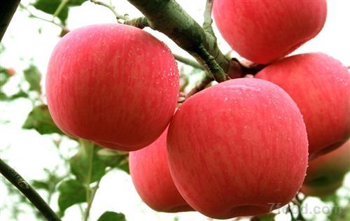 改善便秘保持身材 孕期多吃这种水果好处多