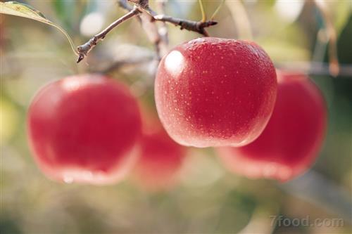 苹果又称平安果 吃苹果有三大禁忌