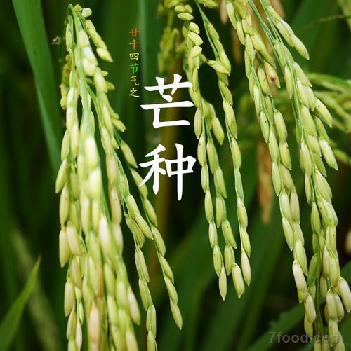 今日芒种 仲夏时节正式开始了